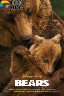 Cuộc Sống Loài Gấu...