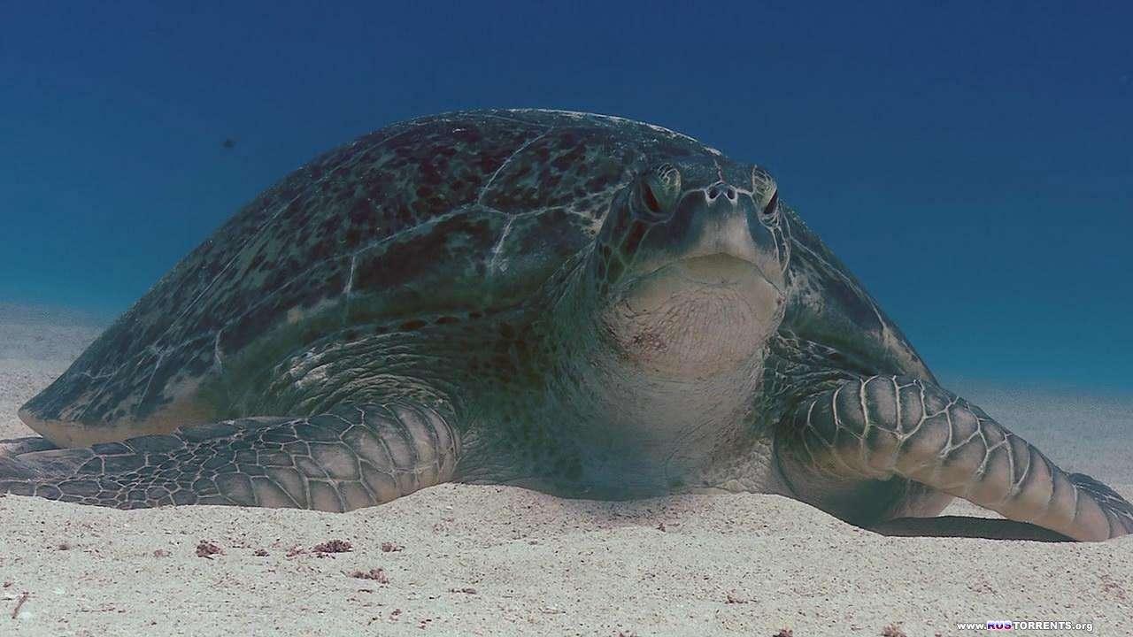 BBC: Планета Земля. Глубины океанов | 1 сезон | 11 эпизод из 11 | HDDVDRip 720p
