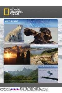 Дикая природа России (1 Сезон) | HDRip