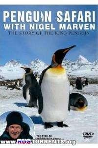 Пингвинье сафари (1-5 серии) | SATRip | P1