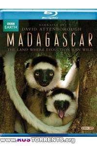 BBC: Мадагаскар: Земля, где эволюция шла своим путём