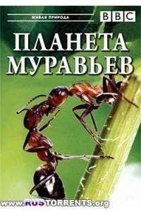BBC: Планета муравьёв - Взгляд изнутри | HDTVRip-AVC