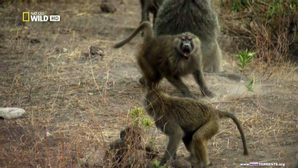 Тайная жизнь хищников (Серии 1-4 из 4) | HDTVRip-AVC