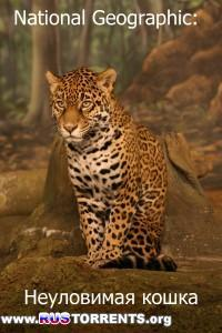 National Geographic: Неуловимая кошка | HDTVRip-AVC