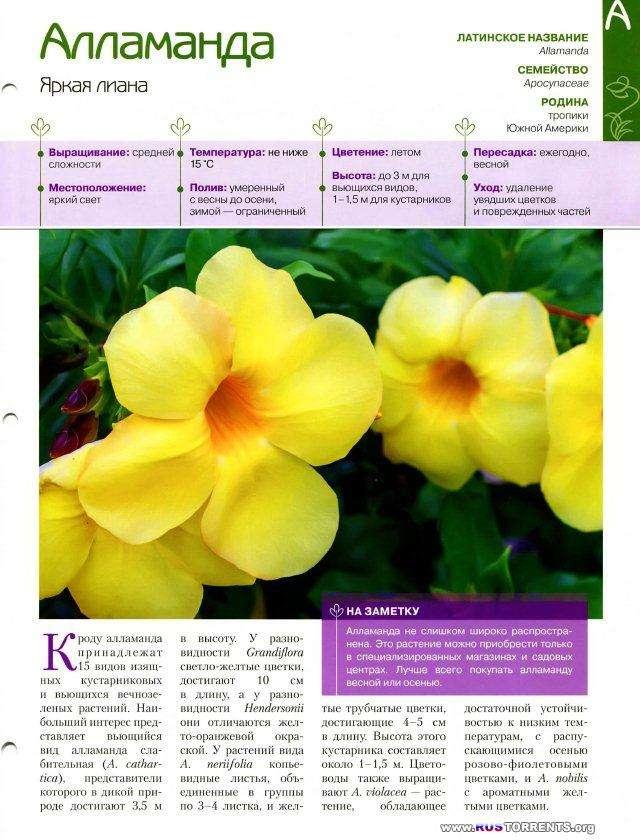 Комнатные и садовые растения от А до Я [01-67 тома + описание коллекции] | PDF