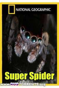 National Geographic. Супер паук | HDTVRip - AVC