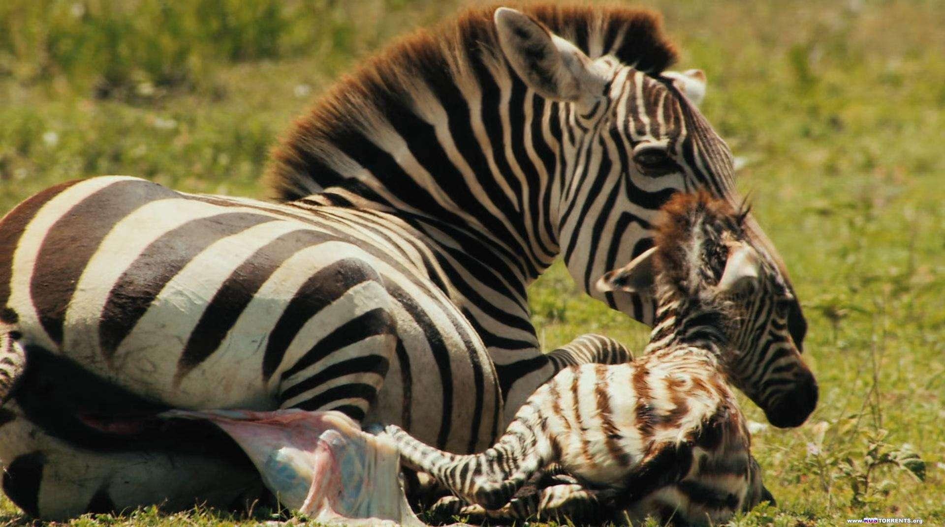 Национальный парк Серенгети | BDRip 1080p
