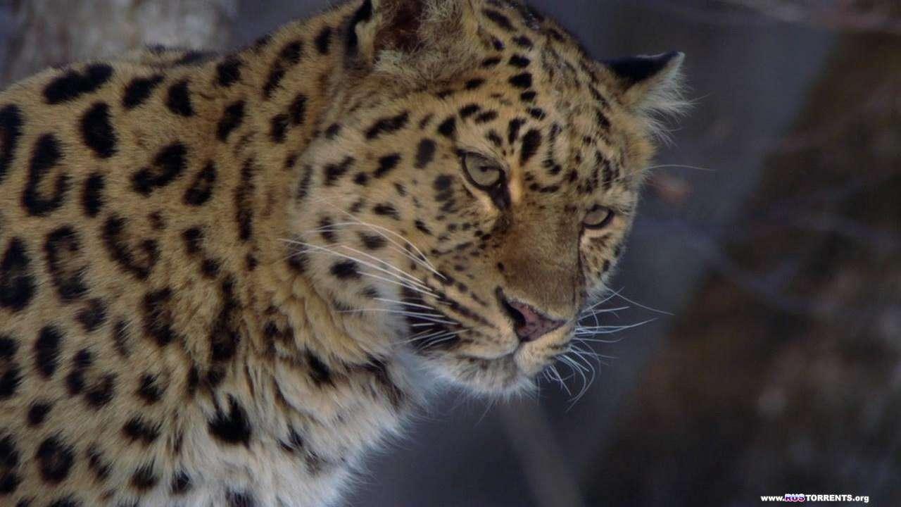 BBC: Планета Земля. Сезонные леса | 1 сезон | 10 эпизод из 11 | HDDVDRip 720p