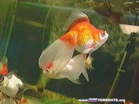 Домашний аквариум (Сезоны 1-3, серии 1-46) | WEBRip