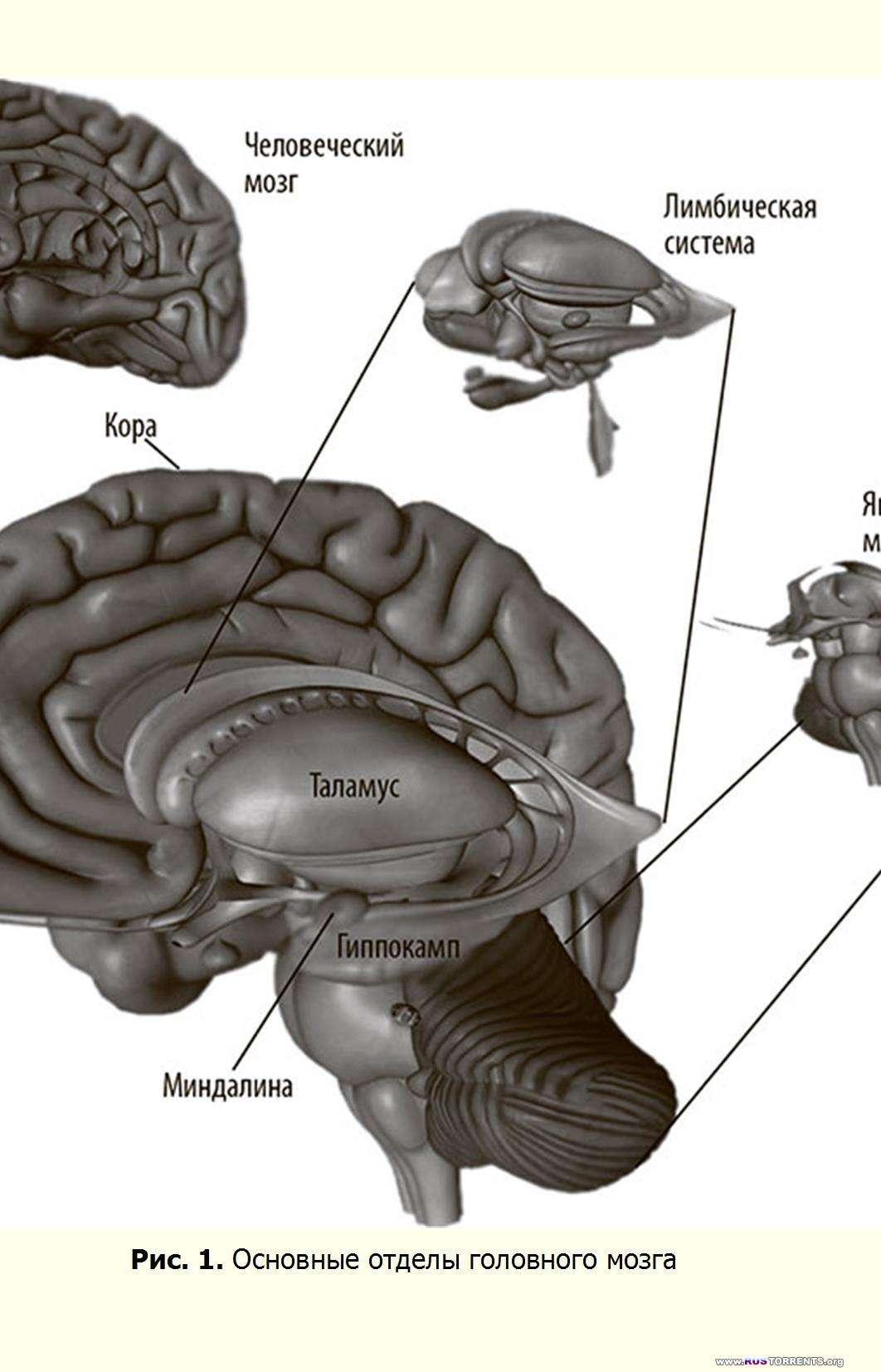 Правила мозга. Что стоит знать о мозге вам и вашим детям | PDF