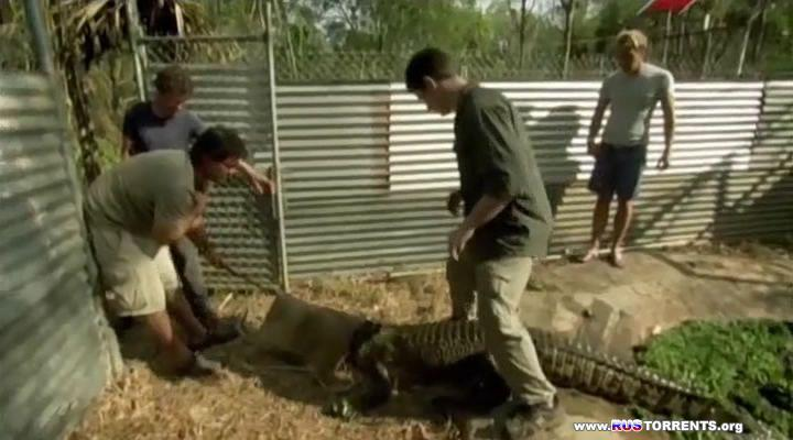 Таинственный мир крокодилов (1-2 серии из 2) | SATRip