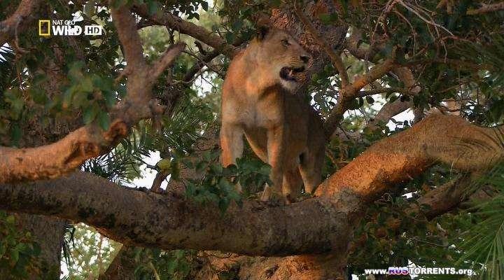 Nat Geo Wild: Болотные львы | HDTVRip