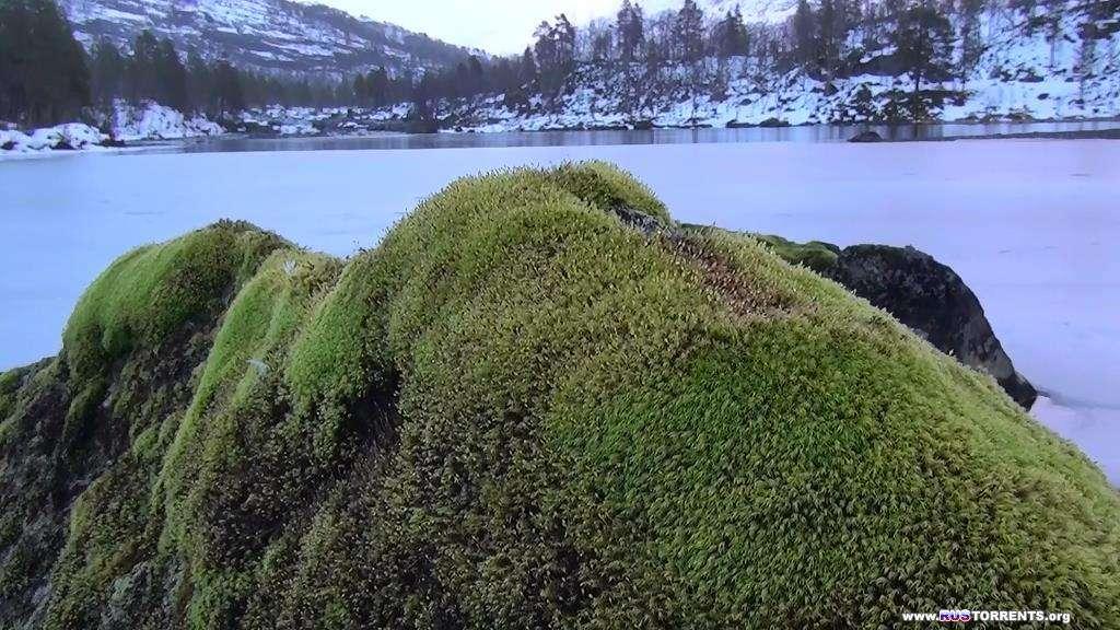 Норвегия 3D: Дикая природа | BDRip-AVC