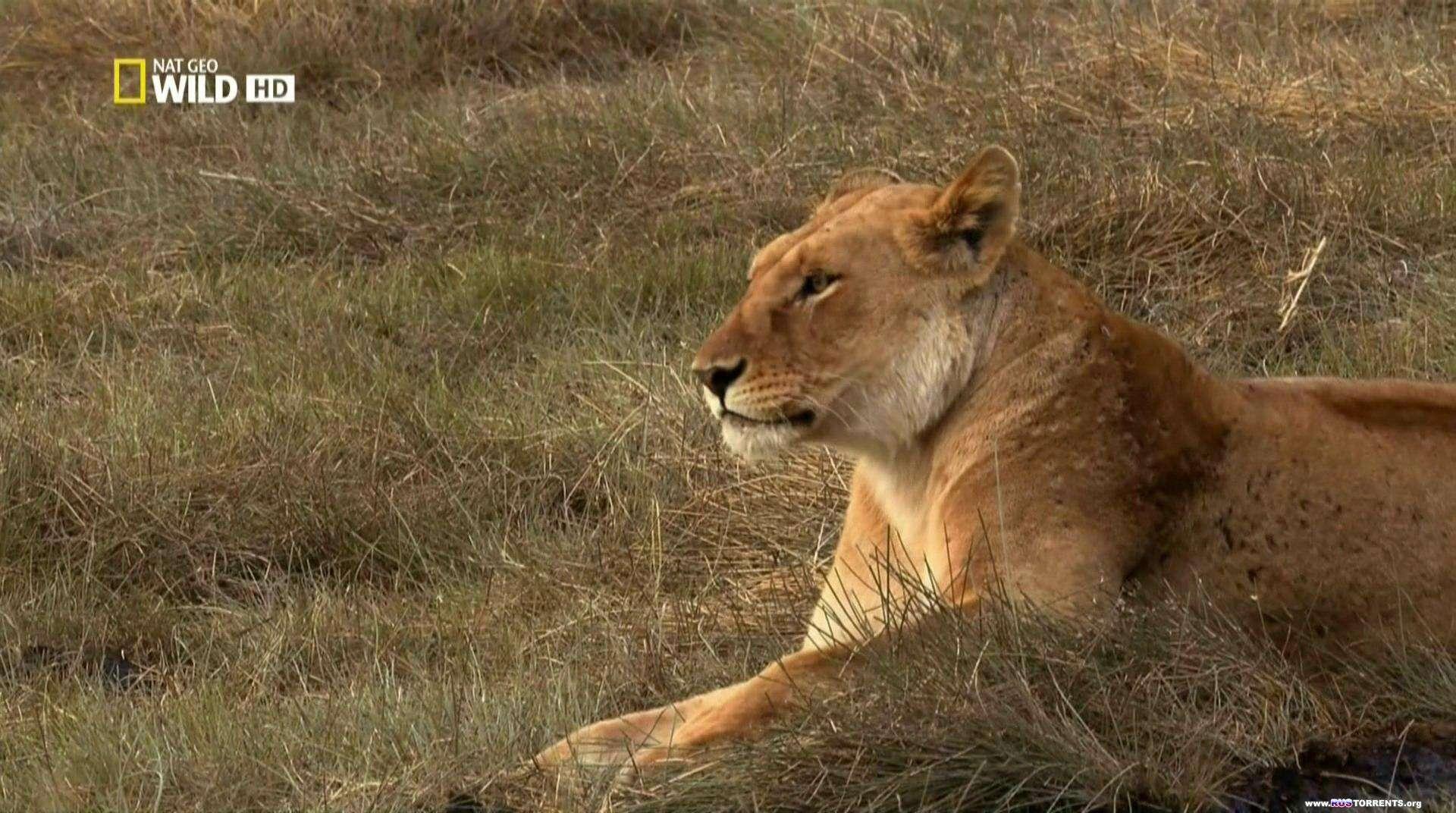 Тайная жизнь хищников (Серии 1-4 из 4) | HDTVRip 1080p