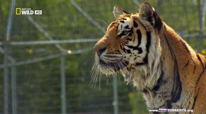 Nat Geo Wild: Американский тигр | HDTVRip