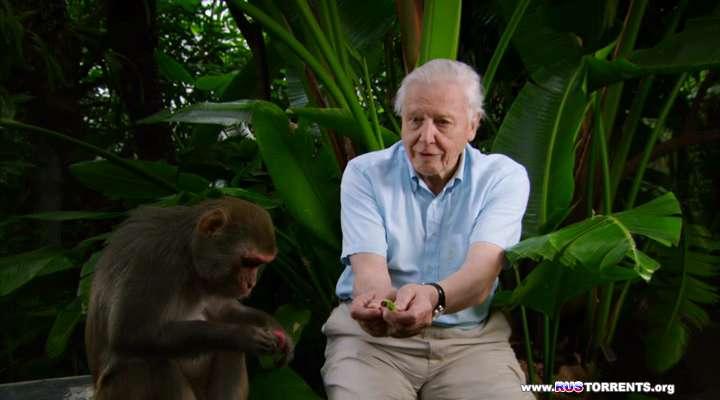 История животного мира с Дэвидом Аттенборо [01-02 из 02] | HDRip | D