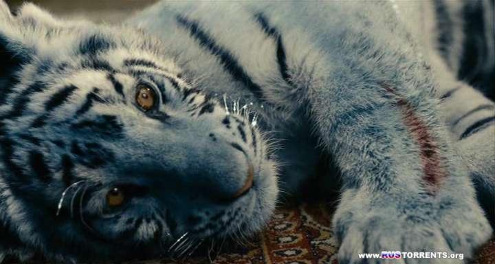 Синий тигр | DVDRip | НТВ+
