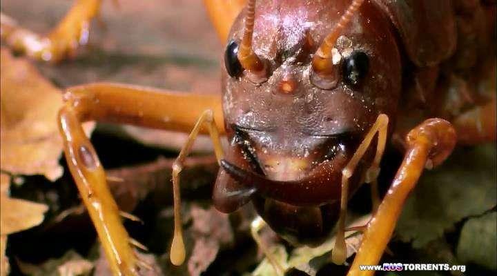 Animal Planet. Самые большие и страшные жуки в мире | BDRip