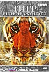 BBC: Тигр: Шпион джунглей | DVDRip-AVC