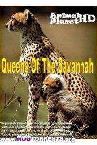 Королевы саванны (Серии 01-03) | HDTVRip