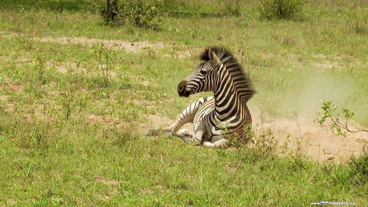 Дикая Южная Африка: Сафари | BDRip 720p