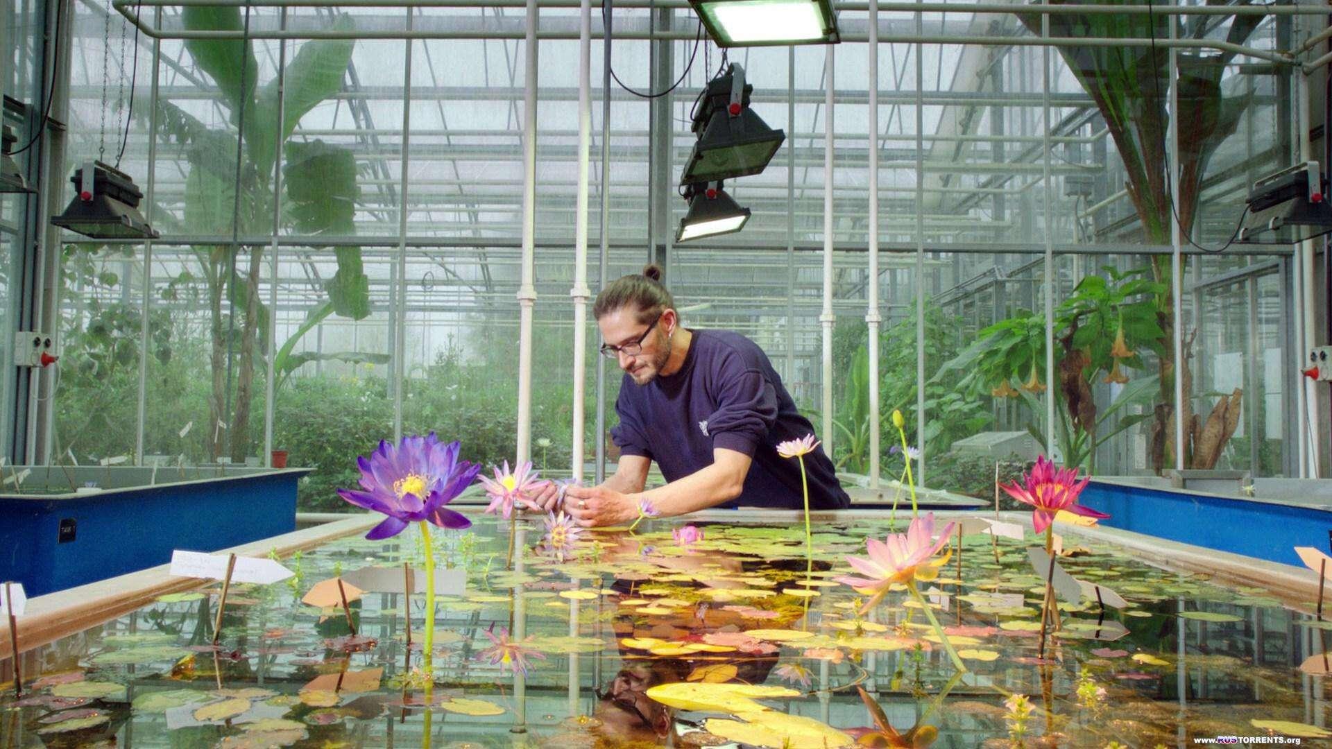 Царство растений [3 из 3] | BDRip 1080p | A