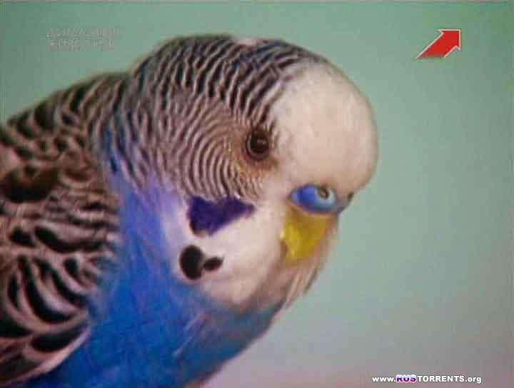 Эти чудесные животные [01-43] | SATRip | D