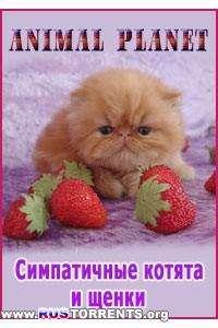 Симпатичные котята и щенки | SatRip