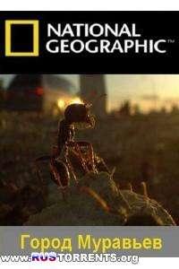 National Geographic: Город муравьёв | HDTVRip