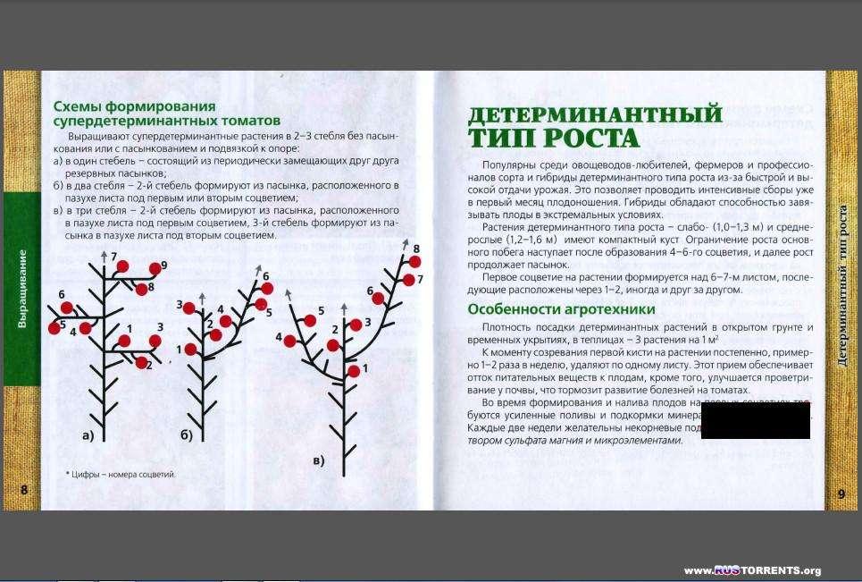 Томаты. Выращивание, хранение и заготовка, целебные свойства