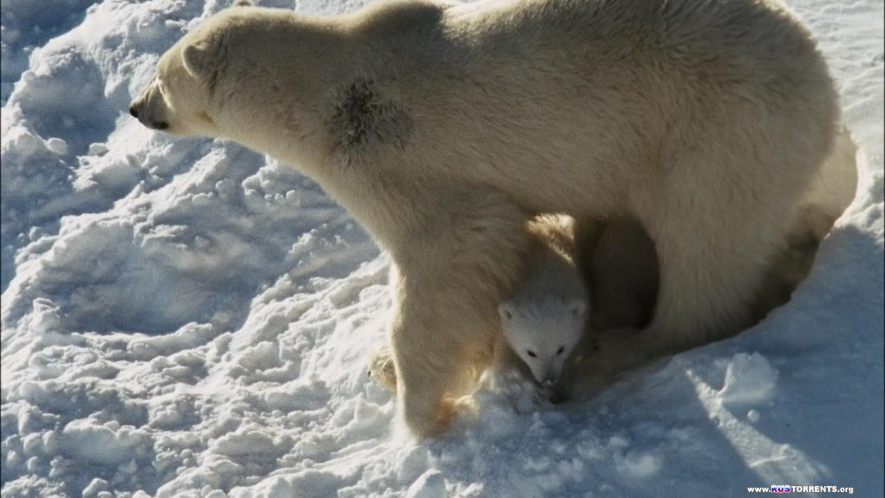 Мишка на севере (Арктическая история)