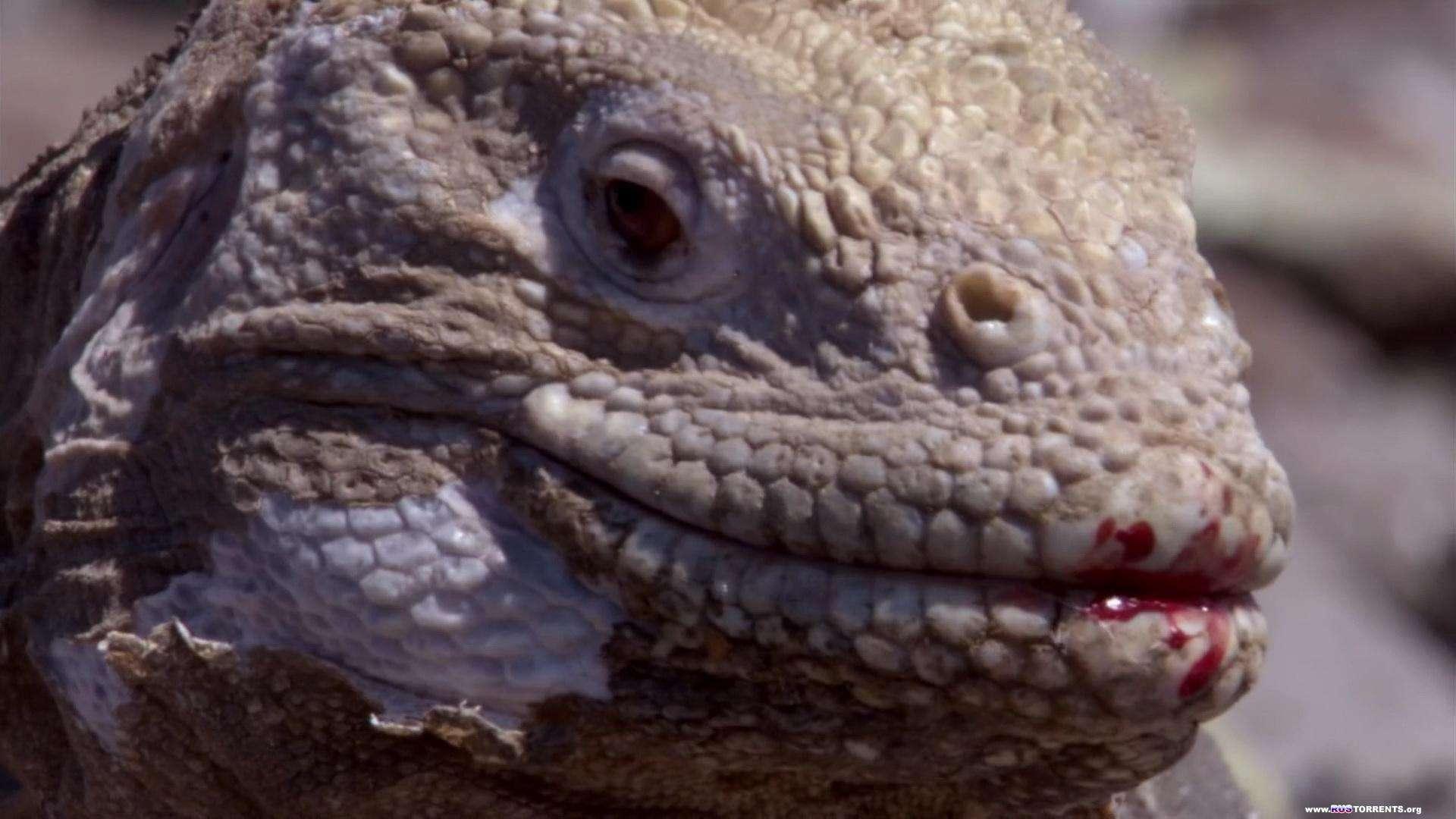 BBC: Галапагосы (1-3 серии из 3) | HD-DVDRip 1080p