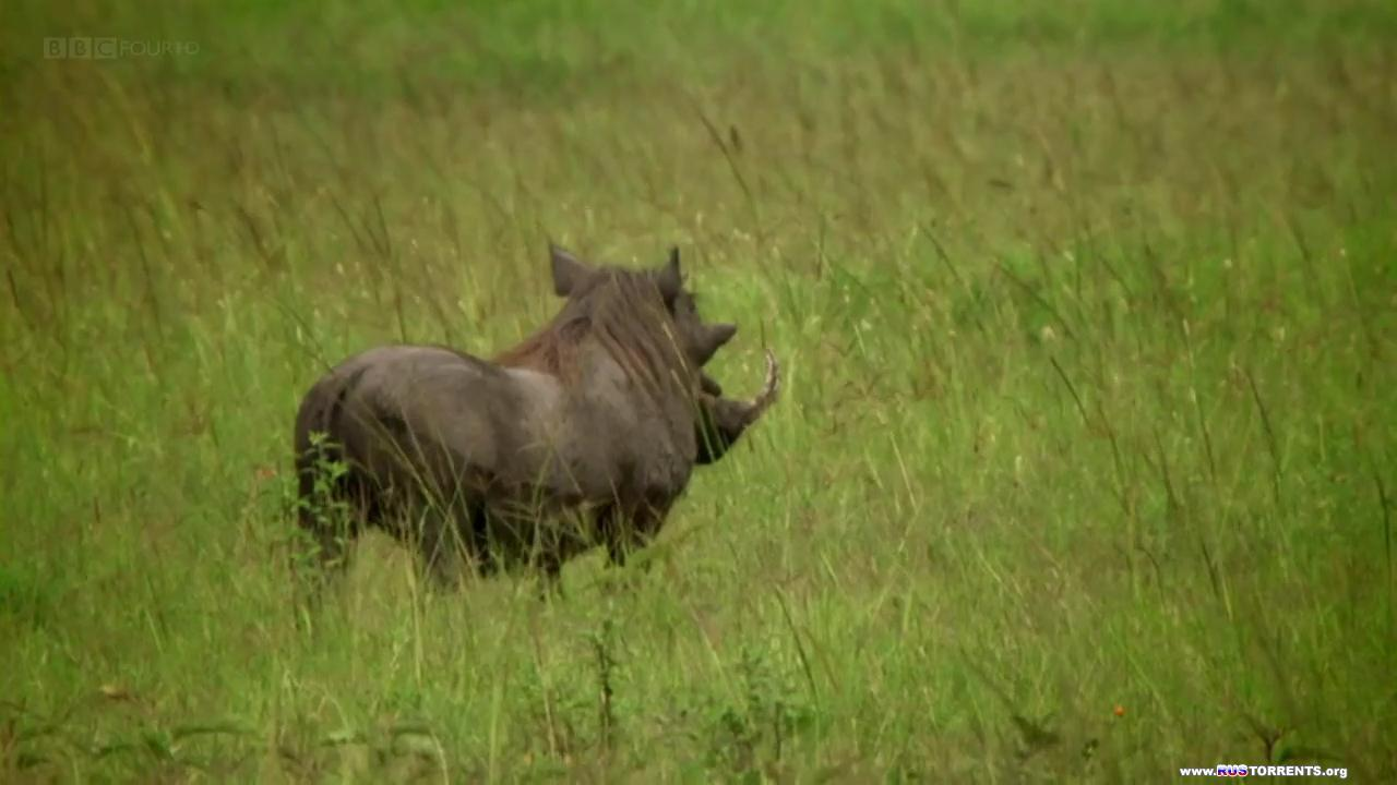 BBC. Чудо животного мира [S01x01-06] | HDTVRip 720p | P1