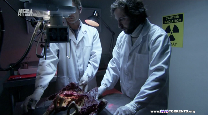 Русалки: Найдено тело | HDTVRip