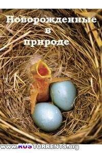 Новорожденные в природе (1-8 серии) | SATRip | P1