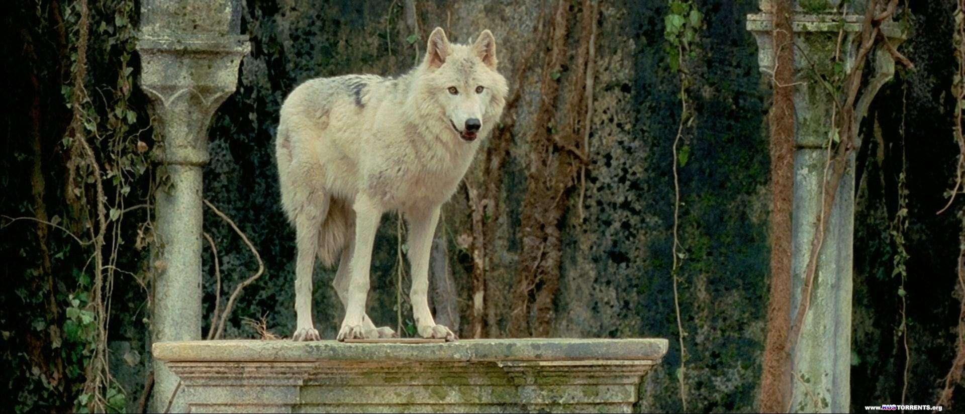 Братство волка | BDRip 1080p