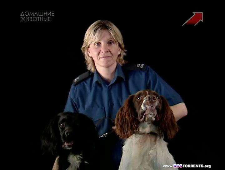 Собачий патруль (1-12 из 12) | SATRip | D