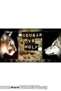 Nat Geo Wild: Пума против волка | HDTVRip