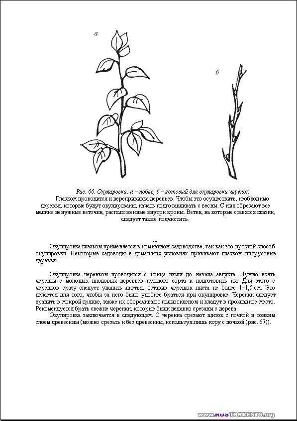 Формировка, прививка и обрезка деревьев и кустарников