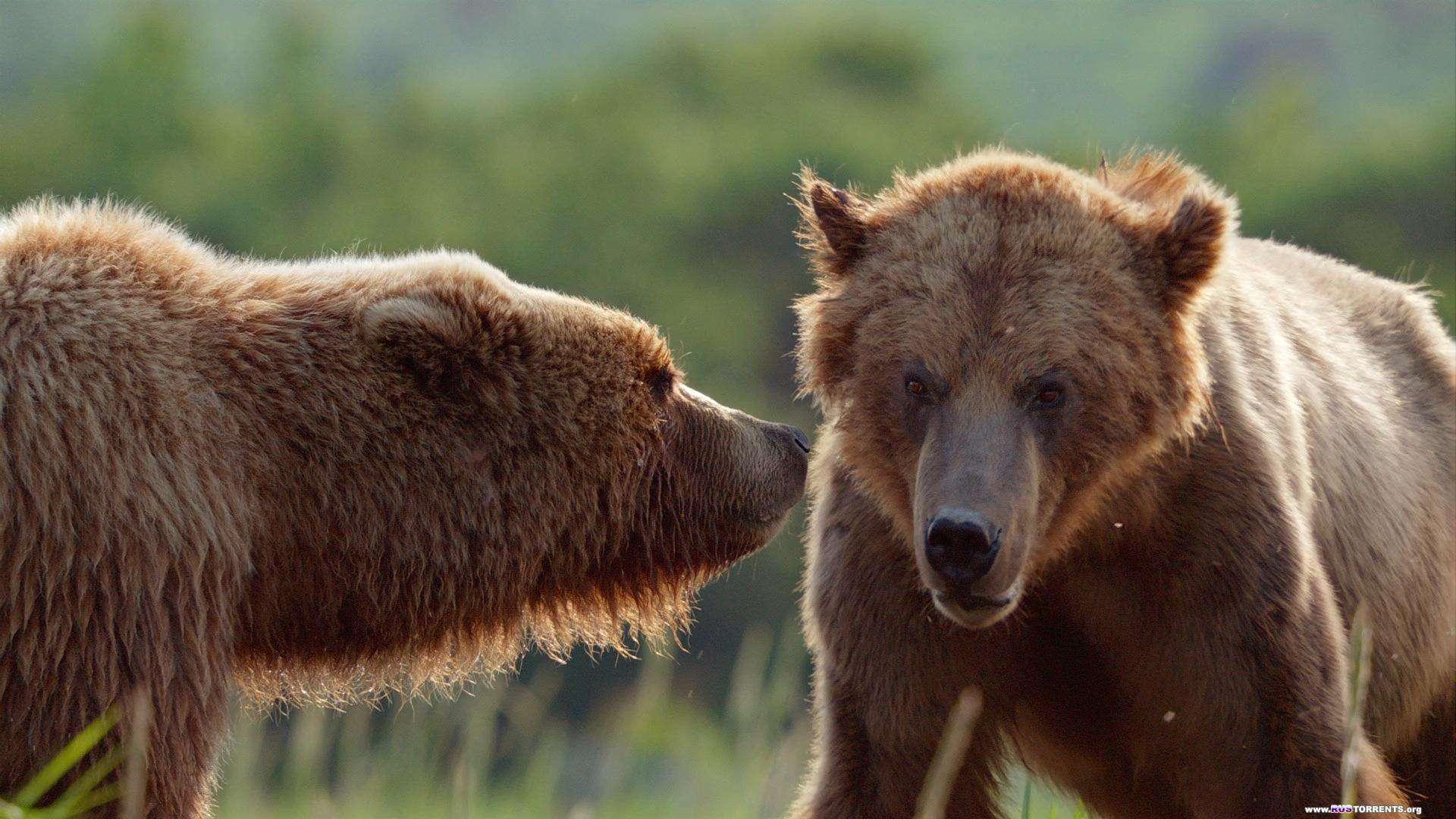 Медведи | Blu-ray EUR 1080p