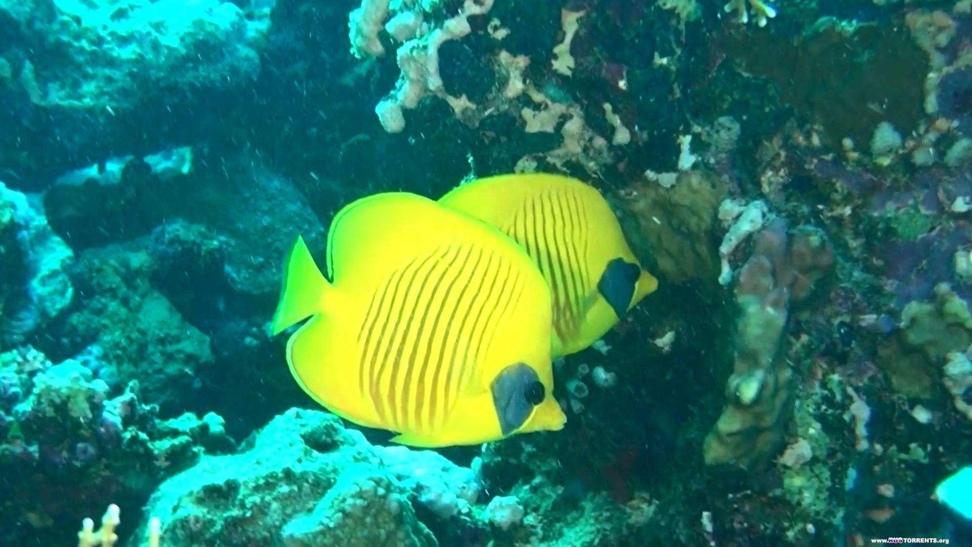 Коралловый риф 3D: Подводный мир Египта | BDRemux 1080p