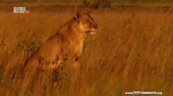 Animal Planet: Последняя львица Лиувы | HDTVRip