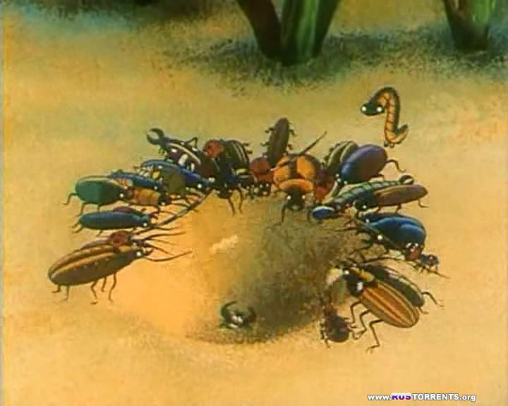 Путешествия муравья