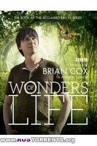 BBC: Чудеса жизни [01-05 серии из 05] | SATRip