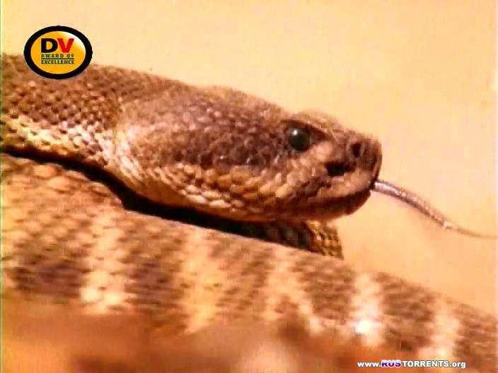 BBC. Паразиты. Съеденные заживо. Змеи [01-05 из 05] | DVDRip