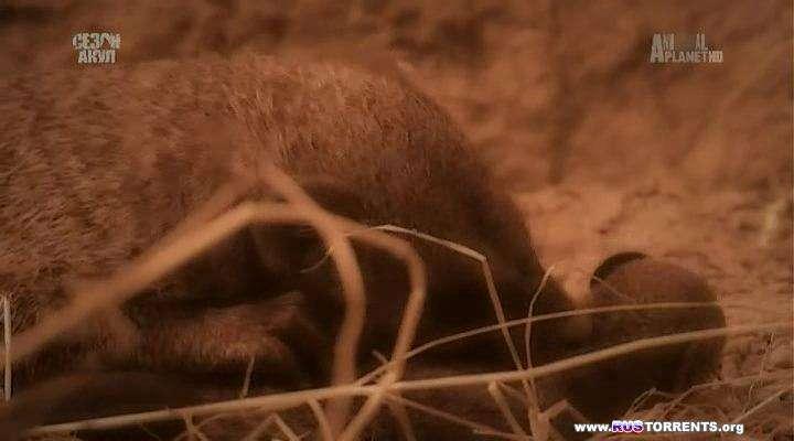 Animal Planet: Загадочные животные острова Джао [01-07] | HDTVRip | P1