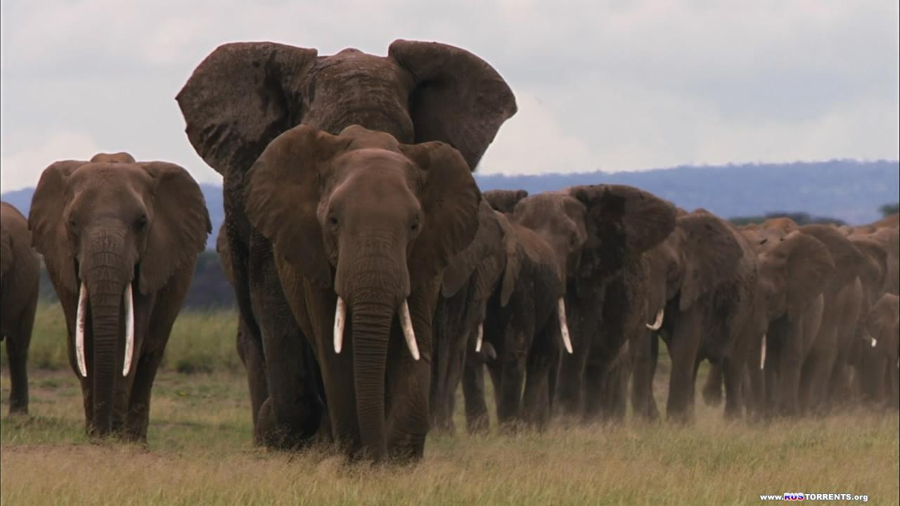 Африка 2013. Cаванна | 1 сезон | 2 эпизод из 6 | BDRip 720p