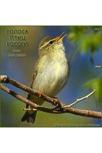 Звуки природы - Голоса птиц России. 800 видов. | MP3