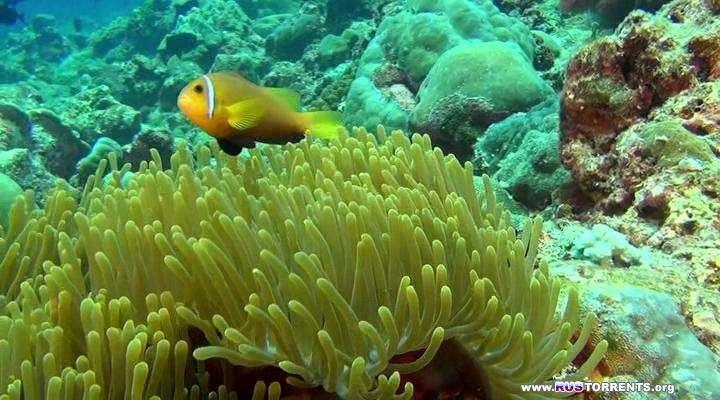 Хищники океанов 3D | BDRip