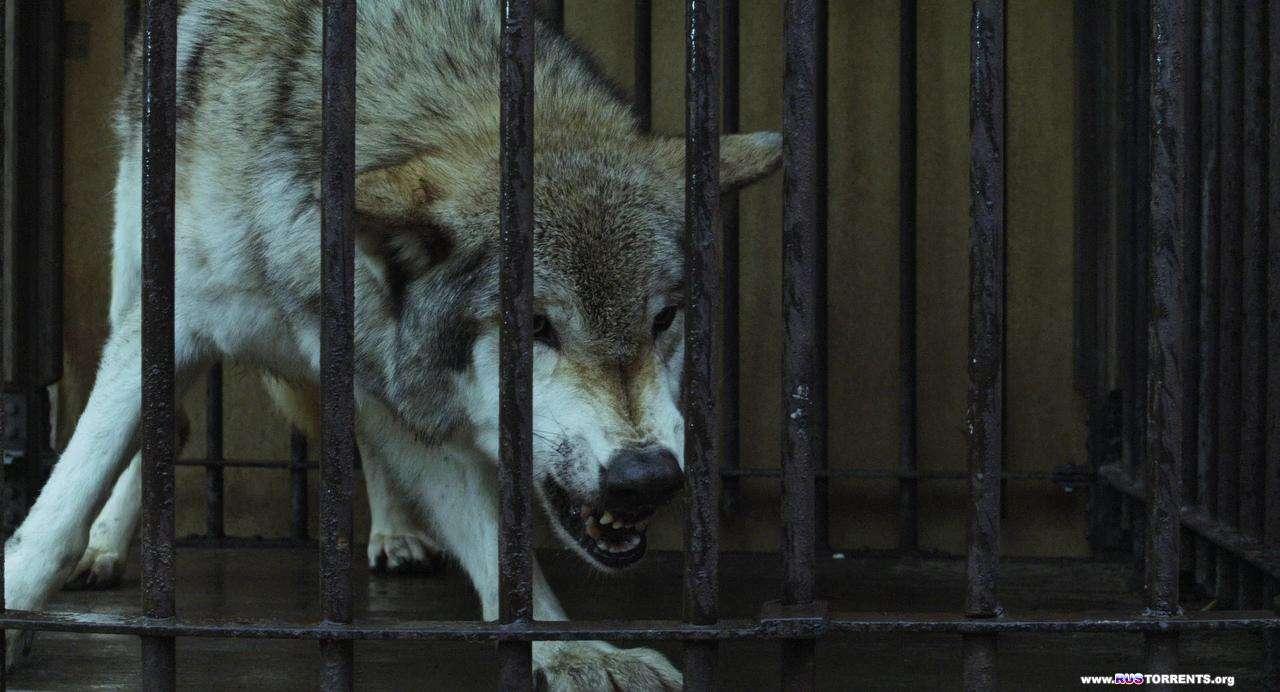 Девушка и волки | BDRip 720p  P